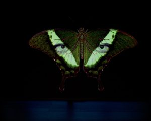 Florencia, butterfly wings